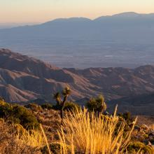A desert landscape at sunset, with Joshua Trees