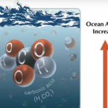 MBARI: Life on the edge: Is ocean acidification a threat to deep-sea life?