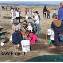 STRAW: Taking Root: Students and Teachers Restoring a Watershed